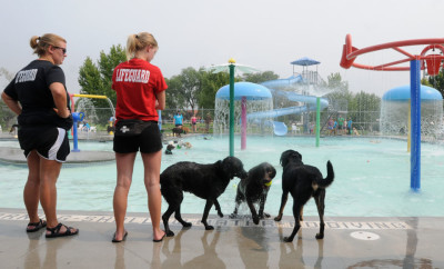 pooch party with lifeguard