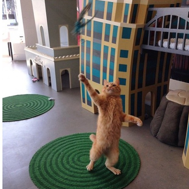 cat cafe cat playing