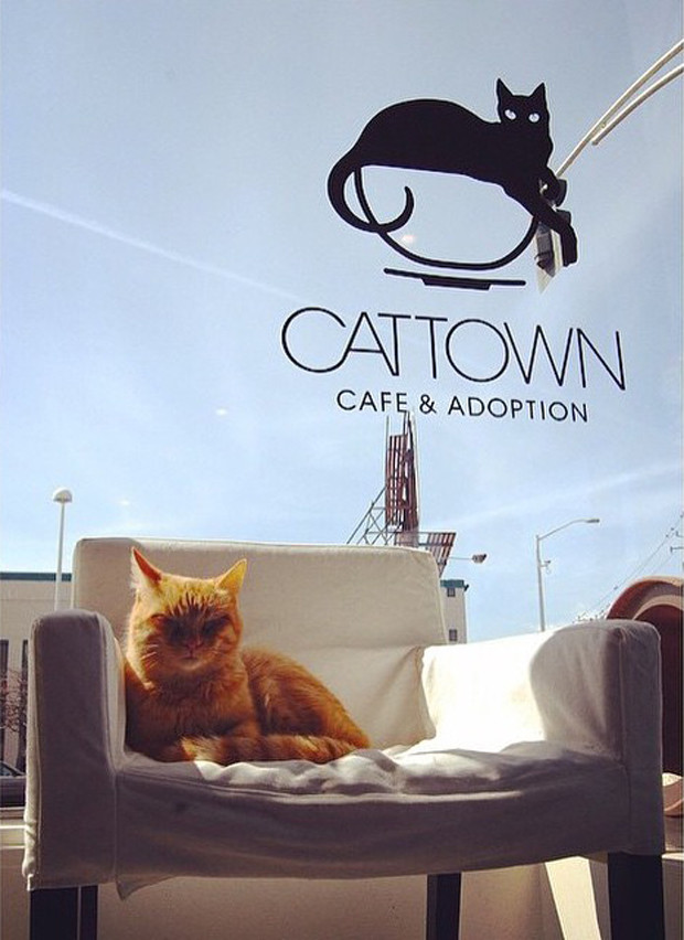 cat-cafe-with-logo