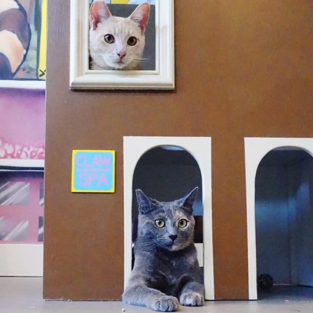 cat town cat cafe