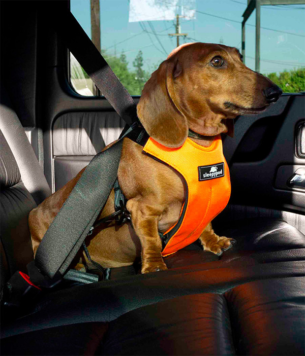 seat-belt-for-dogs-in-use